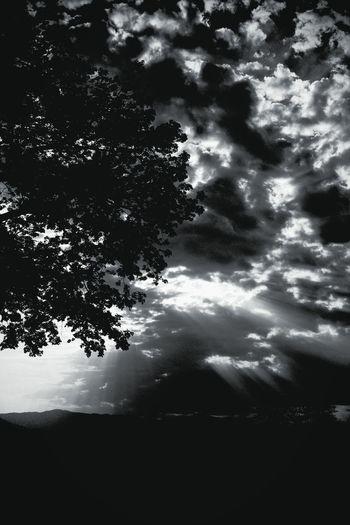 Darkness And Light Night Night Photography Noche Oscuridad Fotografía Nocturna árbol Tree Night Sky Cielo De Noche Cielo Y Nubes  Paisaje Outdoors Twilight Twilight Sky Tinieblas Fine Art Travel Shadows & Lights