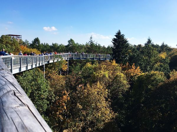 Tree Railing Bridge - Man Made Structure Outdoors Day Growth Sky No People Nature Architecture