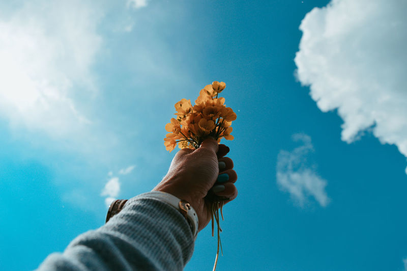 Low angle view of person hand holding flowering plant against sky