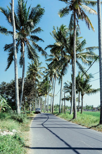 Avenue Bali Beach Beauty In Nature Clear Sky Day Landscape Nature No People Outdoors Palm Tree Paradise Road Roadtrip Scenics Sky Sunlight Tranquil Scene Tranquility Tree Tree Trunk