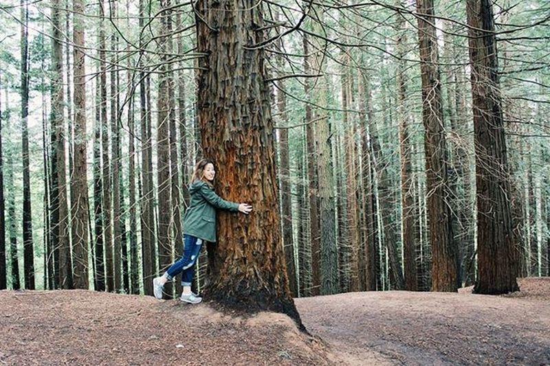 El sitio de mi recreo...✌🌳🌄 Sequoia Cantabria Cabezondelasal Muchapaz Bosque Wood Loveit Instadaily Peace GreenZone