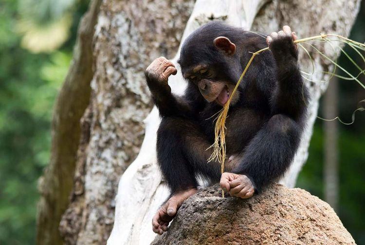 Full length of monkey sitting on rock