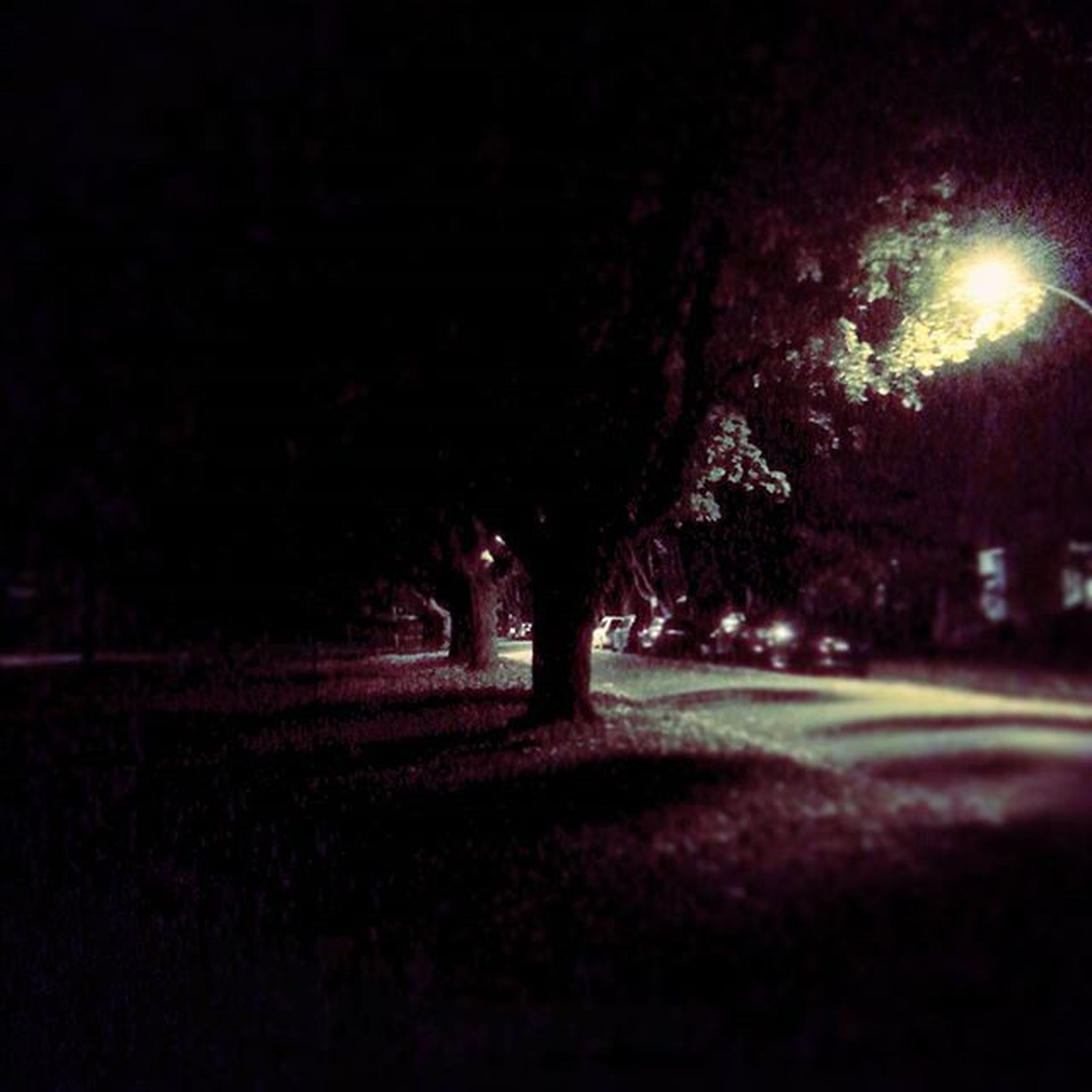 night, illuminated, dark, silhouette, tree, street, field, road, outdoors, light - natural phenomenon, lighting equipment, grass, no people, street light, copy space, glowing, shadow, tranquility, light