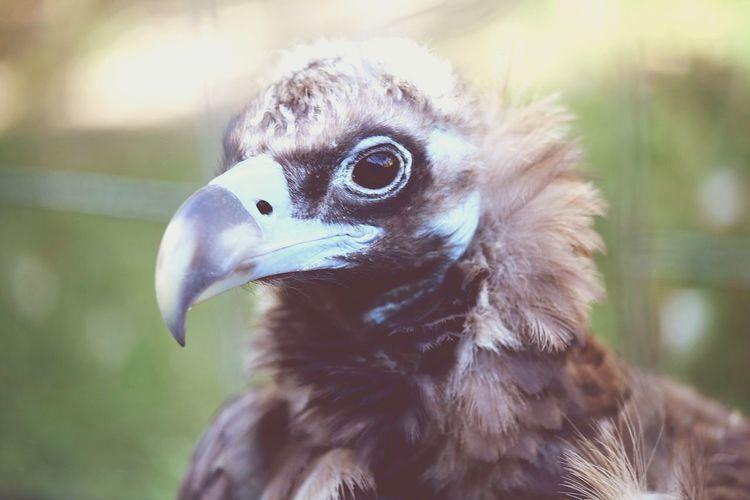 Headshot Of Baby Eagle