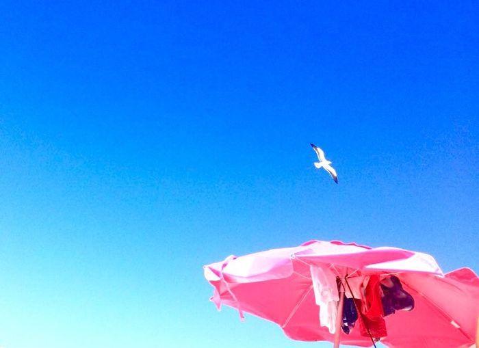 Sobre contrastes e um pássaro a procura de peixe! Beach #sun #nature #water #TagsForLikes.com #TagsForLikesApp #TFLers #ocean #lake #instagood #photooftheday #beautiful #sky #clouds #cloudporn #fun #pretty #sand #reflection #amazing #beauty #beautiful #shore #waterfoam #seashore #waves #wave