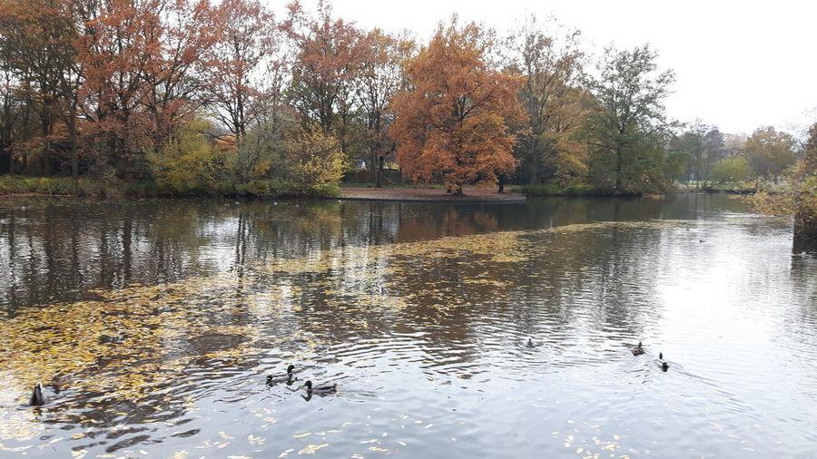 Tree Water Lake Reflection Sky