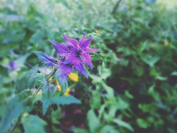 Nature Incredible Purple ♥ Beautiful Day