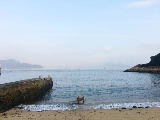 Water Sea Nature Beach Beauty In Nature Scenics Day