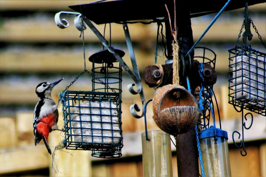 Birds Wood Pecker Taking Photos Hanging Out Eye4photography  Check This Out