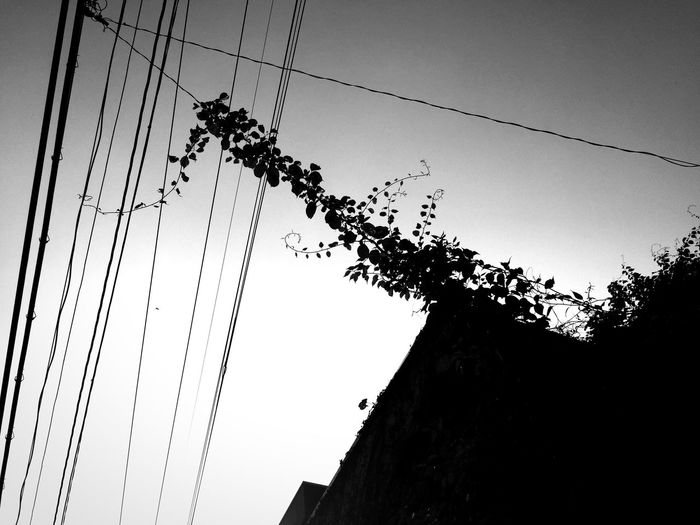 Ivy Ivy Leaves Sunny Day Sky Blackandwhite Black And White Blackandwhite Photography