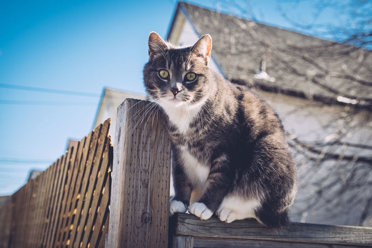 Cat on fence against sky