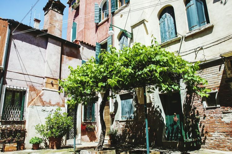 Venice Italy Famous Place Travel Europe Garden Tree Home Summertime Green Architecture
