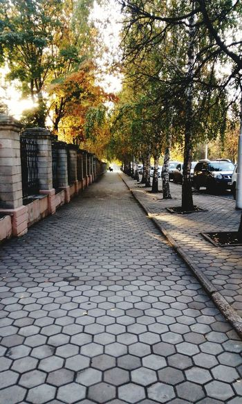 Tree Built Structure Architecture Building Exterior Street Cobblestone Car The Way Forward Transportation City Diminishing Perspective Footpath Branch Tree Trunk Surface Level Day Treelined Growth Long City Life