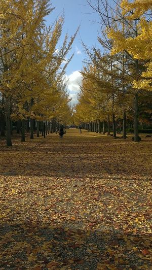 Cityscape Yellow Carpet Landscape