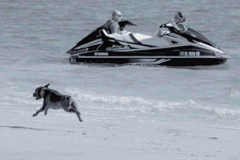 Water Domestic Animals Animal Themes Dog One Animal Pets Outdoors Florida Leisure Activity Beach Fun