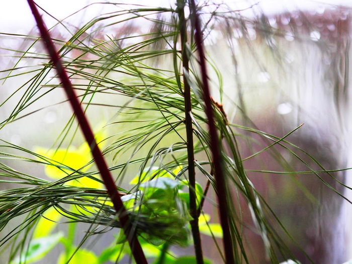Plants Raindrops Beauty In Nature Blade Of Grass Branch Close-up Day Flower Focus On Foreground Fragility Freshness Grass Green Color Growth Indoor Indoor Photography Leaf Nature No People Plant Selective Focus Sunlight Tranquility Vulnerability  Window