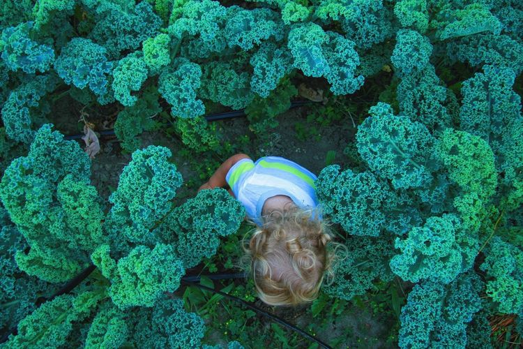 Directly above shot of child hiding amidst kale plants