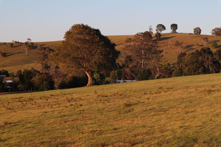Land Tree Sky
