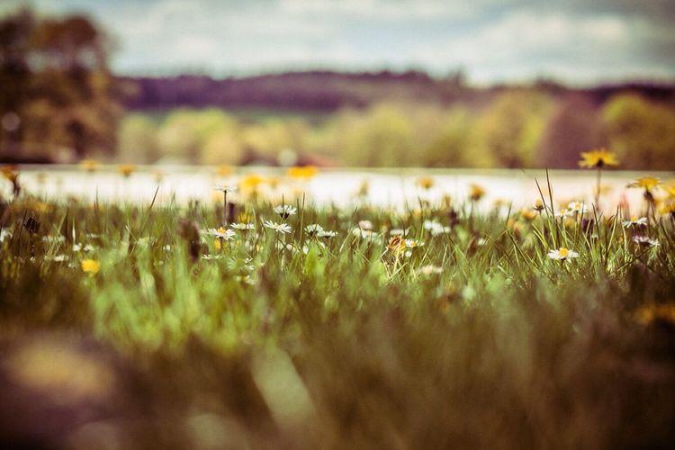 Adventure Club Adventure Club canon canonphotography landscape Landscape_Collection landscape #Nature #photography Nature 50mm 1.4 AdobeLightroom #Showcase July