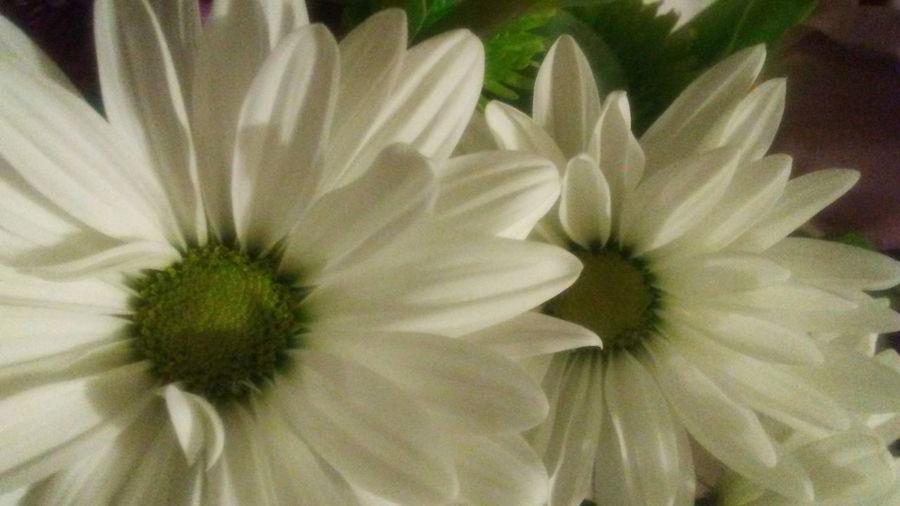 Whiteflowers Flowers Green Leaves Greencenter Beauty In Nature Villanueva'sphoto Taking Photos Love ♥ First Eyeem Photo VSCO ❤ Beauty Beautiful Day Photography Photographer White Flower Beatiful Nature