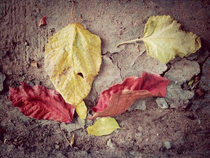 ใบไม้