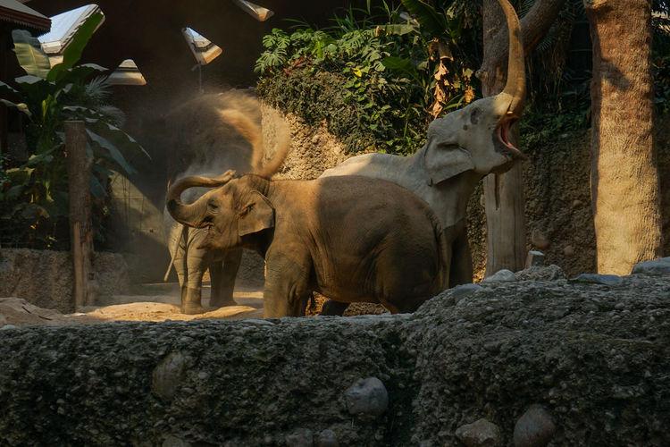 Elefanten Tree