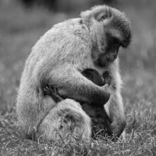 Close-up of monkeys in field
