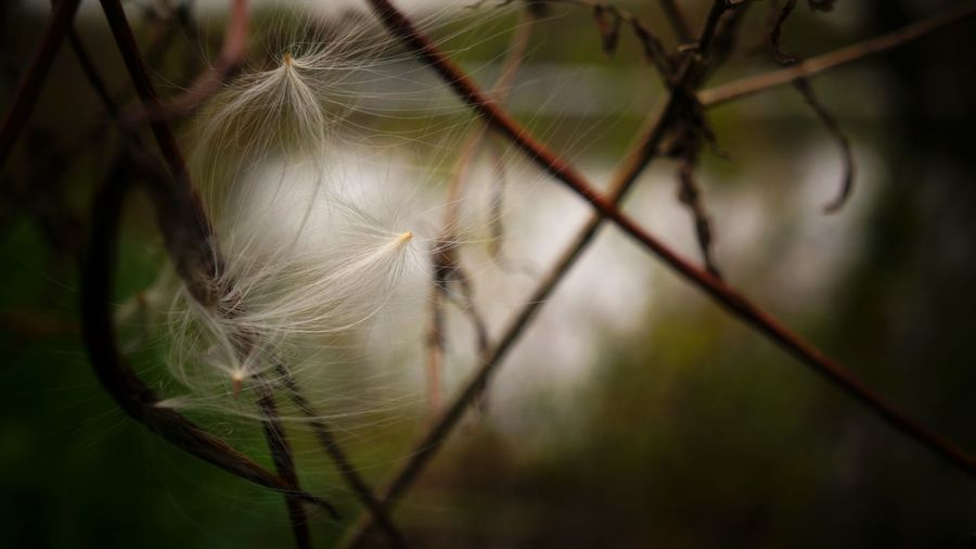 Beauty In Nature Close-up Day Focus On Foreground Fragility Growth Nature No People Outdoors Softness White Color