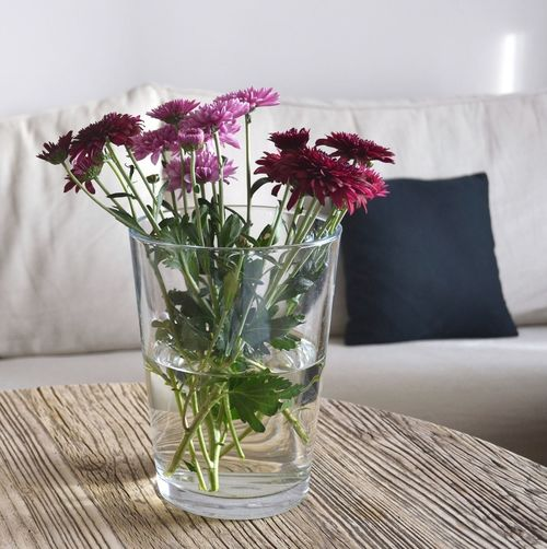 Maroon and pink chrysanthemums in vase on table at home