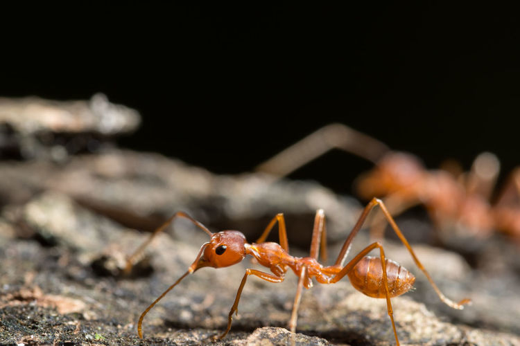 Close-Up Of Ant Walking