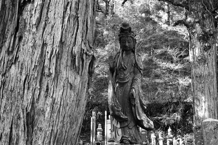 Death Japanese Cemetery Japanese Culture Japanese Tradition Silence Solitude Tanquility Traditional Cemetery