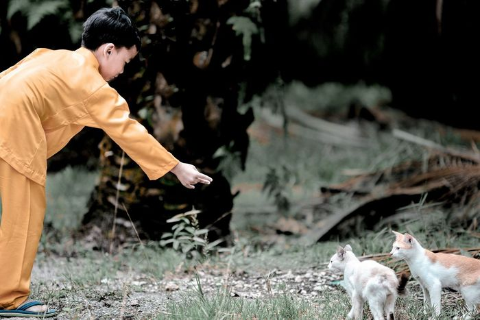 Animal Boy Cats Domestic Animals Feeding  Feeding The Cats Grass Kindness Kindness To Animals Orange Costume Outdoors Palm Trees Pets Plantation Traditional Clothing Act Of Kindness