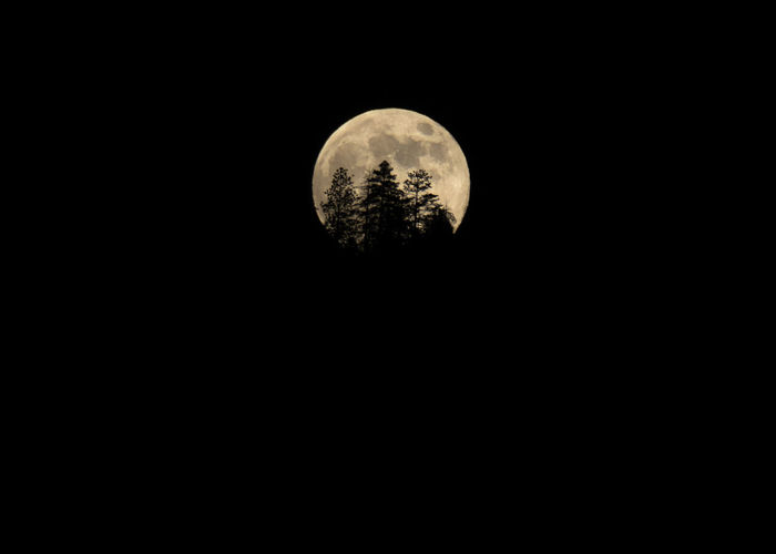 Full Moon Detail With Forest Tree Silhouettes Big Moon Darkness Evening Light Full Moon Full Moon Behind Trees Giant Moon Moon Rising Night Photography Trees Astronomy Beauty In Nature Copy Space Craters Forest Mushrooms Forest Photography Lunar Moon Moon Craters Moon Light Moon Surface Moonlight Moonrise Night Outdoors Tree Silhouette