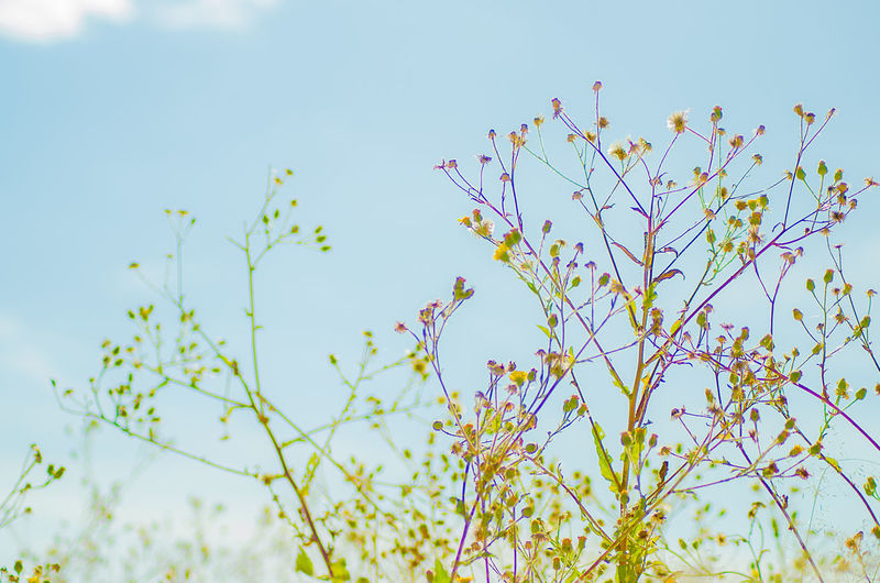 Beauty In Nature Blooming Blossom Blue Branch Clear Sky Close-up Day Flower Flower Head Fragility Freshness Growth Low Angle View Nature No People Outdoors Plant Sky Springtime Tree