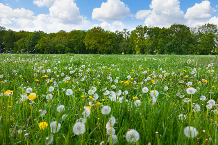Plant Flower Flowering Plant Field Land Cloud - Sky Beauty In Nature Growth Sky Landscape Nature Environment No People Grass Freshness Tree Green Color Rural Scene Day Fragility Springtime Flower Head Flowerbed