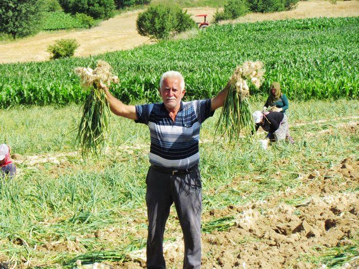 Portrait Of Senior Farmer Holding Vegetables While Standing On Field