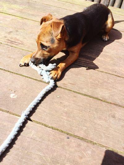 Dog Pets One Animal Domestic Animals Animal Themes Mammal Sunlight Day Sidewalk Outdoors High Angle View No People Shadow Beagle