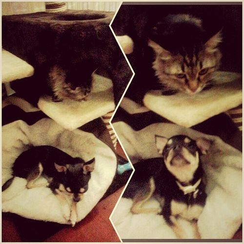 Мои любимцы))) I Love My Dog
