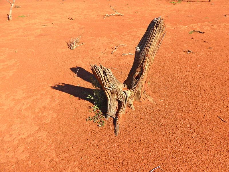 Dead Tree Stump Red Earth Sand Blasted Tree Stump