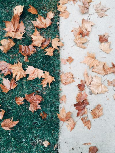 High Angle View Of Dry Maple Leaves On Grass And Footpath