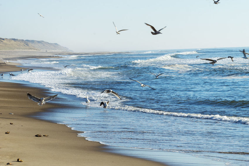 Seagulls fishing on the Beach in Denmark Denmark Denmark Love ❤️ Seagulls Animal Animal Themes Animals In The Wild Beach Beauty In Nature Fishing Horizon Over Water Land Motion Sea Seagull Seagulls And Sea Sky Water