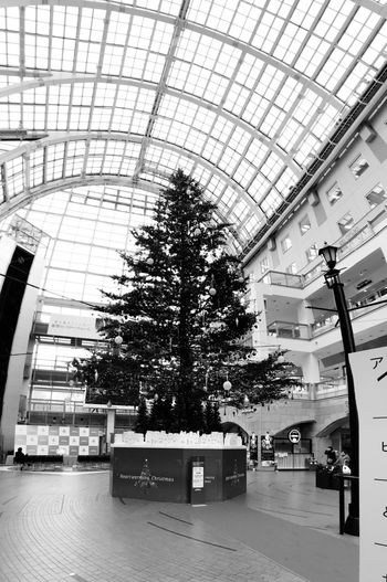 EyeEmNewHere Architecture Built Structure Modern Indoors  Tree No People Building Exterior Day City Clock Sky Black And White Friday