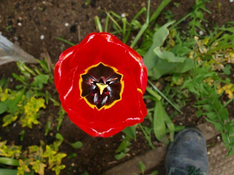 Planten Un Blomen Blumen blumojn Hello World Hamburg Plants Blumoj Kwiaty Park