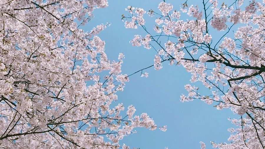 Flowers 🌸🌸🌸 Korean Flower
