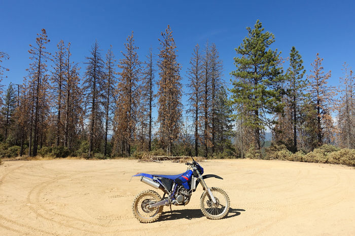 Dirt bike motorcycle parked in a forest of tall trees Adrenaline Adrenaline Junkie Atv California Dirt Bike Dirt Biking Dirt Road Forest Forest Road Horsepower Joy Ride Motorbike Motorbiking Motorcycle National Forest Off Road Off Roading Offroad Recreation  Recreational Vehicle Riding Stanisluas National Forest Tall Trees Trail Ride Trail Riding