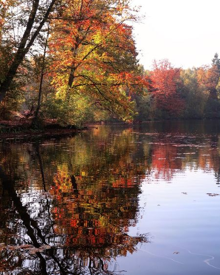 Lac de Béhoust, France Tree Reflets Beautiful Saisons Automne Amazing Love Paysage Canon Fall Leaves Autumn Amazing Nature Soleil Lac Beauty In Nature Lake View Beautiful Day
