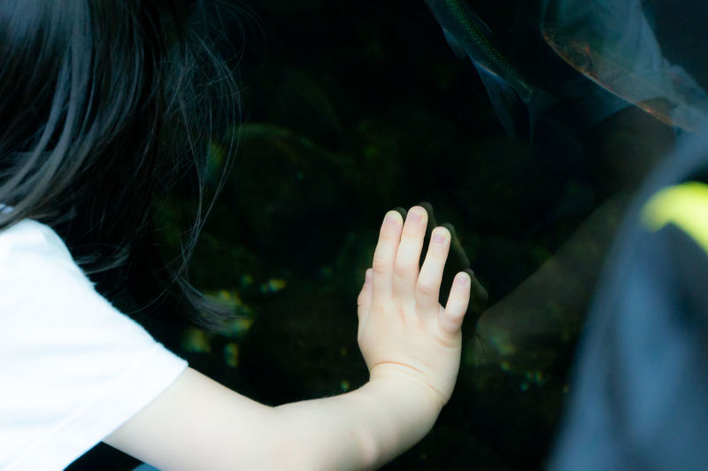 Close-up of girl looking at fish tank