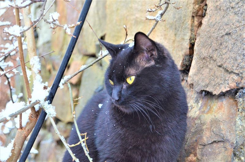 Cat Feline Mammal Animal Themes Domestic Cat Domestic One Animal Animal Domestic Animals Pets Vertebrate Black Color No People Plant Tree Day Nature Close-up Branch Outdoors Whisker Animal Head  Oslo Black Cat Animal Lover