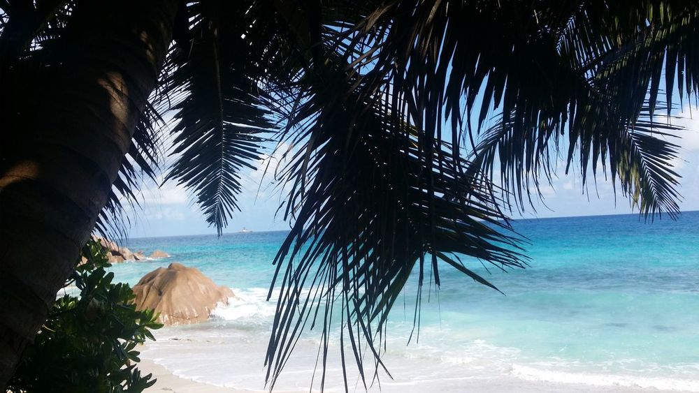 Ansepatates Ladigueisland Beachlife Seychellesbeauties Seychellesisland Clearwater Indianocean