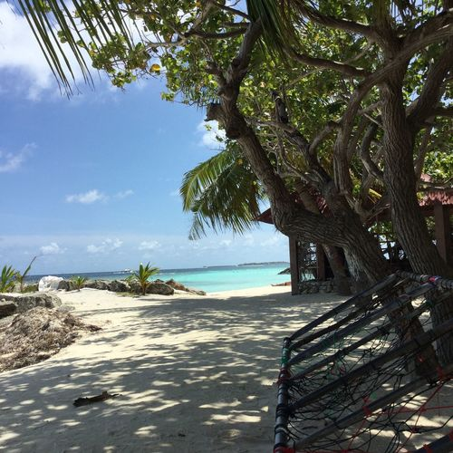 Mafushi Maldives Tree Beach Sea Nature Beauty In Nature Sand Tranquility Scenics Tranquil Scene Sky No People Branch Tree Trunk Outdoors Growth Water Palm Tree Day Horizon Over Water